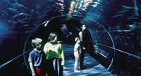 Acrylic underwater tunnel